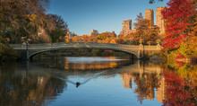 Fall Colors In Central Park, N...