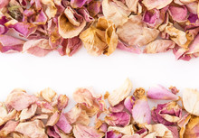 Dry Pink And White Rose Petal