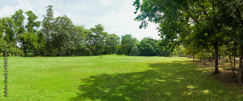Obraz green grass field in big city park - fototapety do salonu