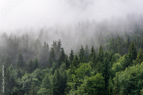 Papiers peints Forets Fog Rolling In Over Lush Evergreen Forest