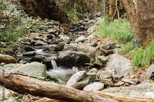 Fototapeten Forest river Mountain Stream