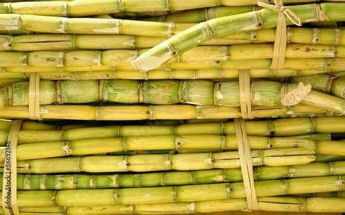 Fotografie, Obraz  Bundles of Sugar Cane