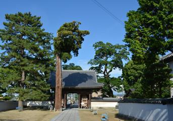 大木と青空
