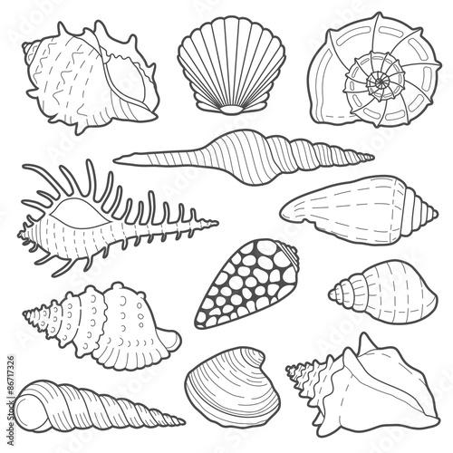 Photo Sea shells vector icon set