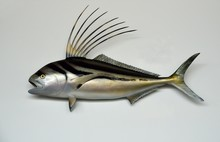 Rooster Fish Mounted With Isol...