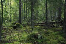 Summer Dense Forest Landscape