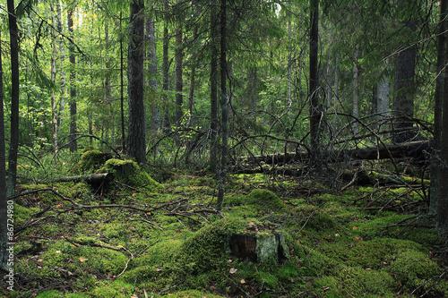 Summer dense forest landscape Wallpaper Mural