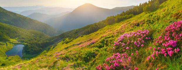 FototapetaFlowers in summer mountains