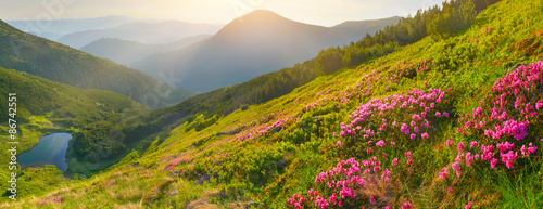 Poster Miel Flowers in summer mountains