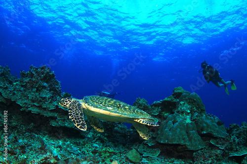 Foto op Canvas Duiken Scuba divers and Hawksbill Sea Turtle