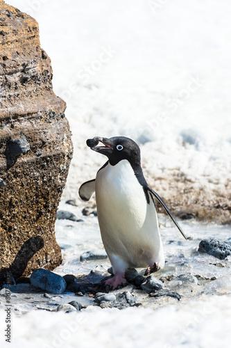 Papiers peints Pingouin Penguins of Antarctica