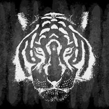 Hand Drawn Tiger On Chalk Board, Grunge.