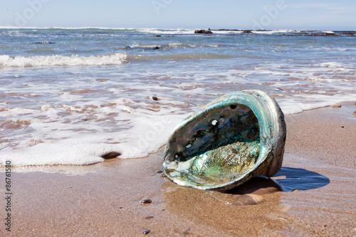 Canvas Print Shiny nacre Abalone shell washed ashore onto beach