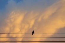 Silhouette Bird On Electric Wire On Sunset