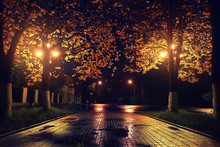 Autumn Night Landscape In The ...