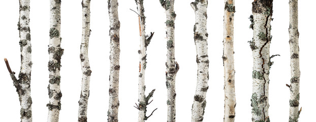 Fototapeta Birch trunks isolated on white background