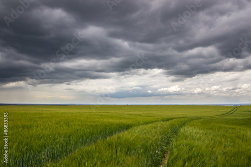 Cadres-photo bureau Jaune field landscape