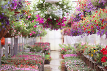 Greenhouse Full Of Colorful Flowers