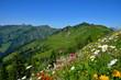 Blumenwiese und Berge in den Alpen, Österreich