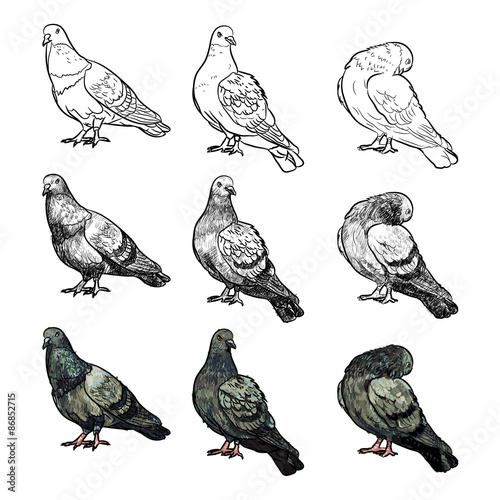 Set of pigeons in three pose and styles Wall mural