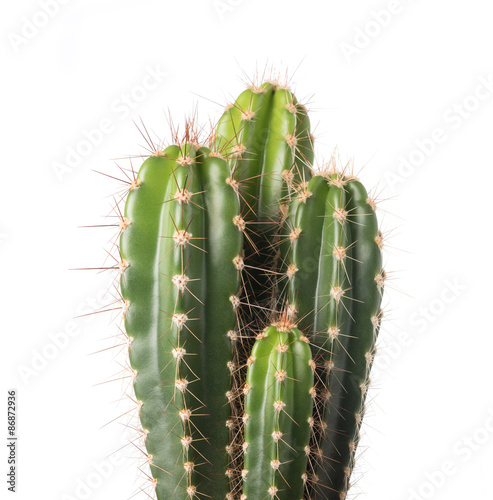 Foto op Plexiglas Cactus cactus isolated on white