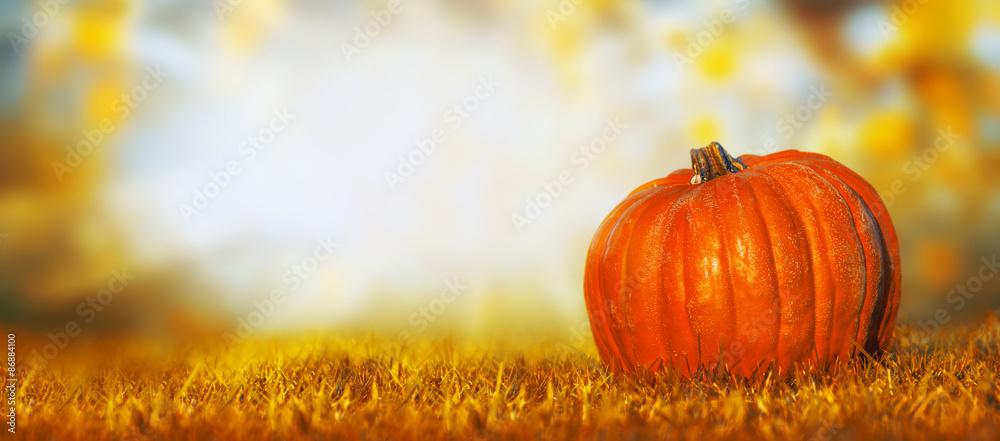Valokuva  Pumpkin on lawn over autumn nature background, banner