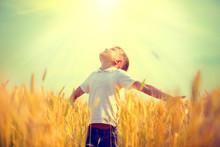 Little Boy On A Wheat Field In The Sunlight Enjoying Nature