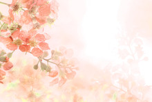 Soft Sweet Orange Flower Background From Plumeria Frangipani Flowers