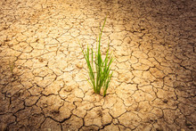 Plant On Cracked Soil And Dry ...