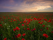 Sunset over poppy meadow