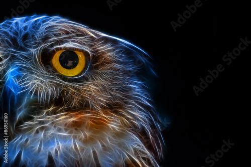 Canvas Prints Owls cartoon Digital fantasy drawing of an owl