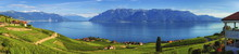 Panorama On Lavaux Region, Vau...