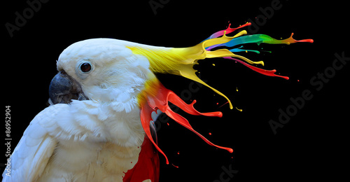 Poster de jardin Perroquets Digital photo manipulation of a white parrot