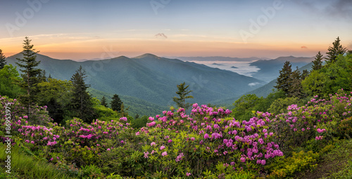 Foto op Aluminium Bergen Blue Ridge Mountains, Rhododendron, sunrise