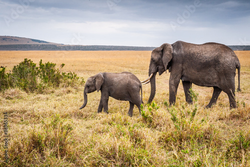 Foto op Aluminium Olifant African elephant and its little baby in Kenya, Africa