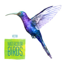 Vector Watercolor Style  Illus...