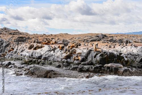 Papiers peints Arctique Sea lions on the rock, Beagle Channel, Tierra del Fuego