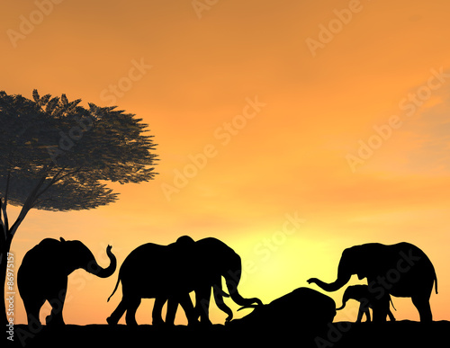 Foto op Aluminium Koraal Elephants Morn Their Dead at sunset, a very tender scene.