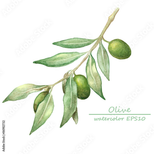 Fotografie, Obraz  watercolor olive branch card.