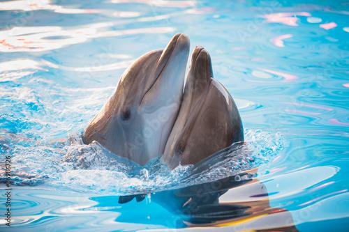 In de dag Dolfijn pair of dolphins dancing in water