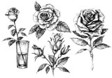 Roses set, floral design elements collection