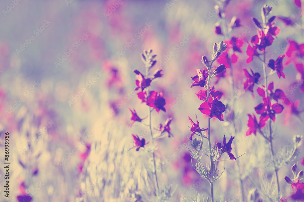 Fototapeta purple wild flowers