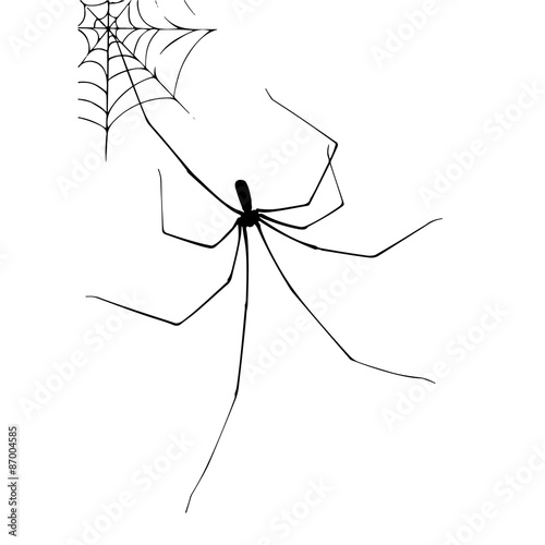 Photo Spider and web stylized illustration vector