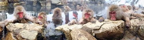 Foto op Plexiglas Aap Affen baden in einer heißen Quelle in Japan Yudanaka