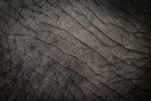 Elephant Skin Background Texture Abstract