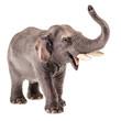 Isolated Elephant figurine