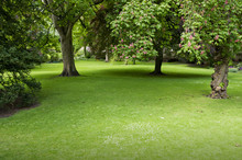 Green Lawn With Trees In Park In York, UK, Europe