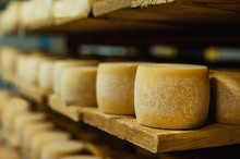 Wheels Of Cheese In A Maturing Storehouse Dairy Cellar