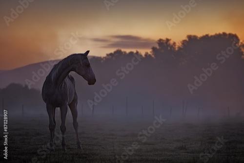 In de dag Grijze traf. Horse at dusk
