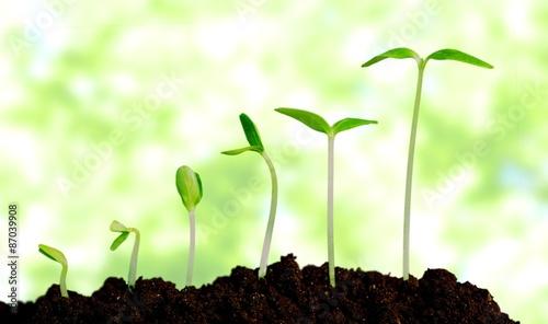 Fotografia  Grow, growing, plant.